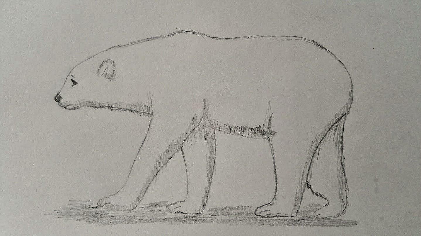 Polar Bear to print e