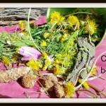 Creating Beautiful Spaces – Fairy Garden