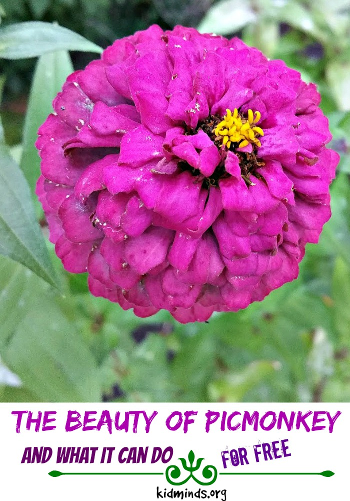 The Beauty of PicMonkey and what it can do for free