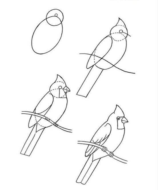 Audubon Inspired Bird Study and Cardinal Drawing Instructions