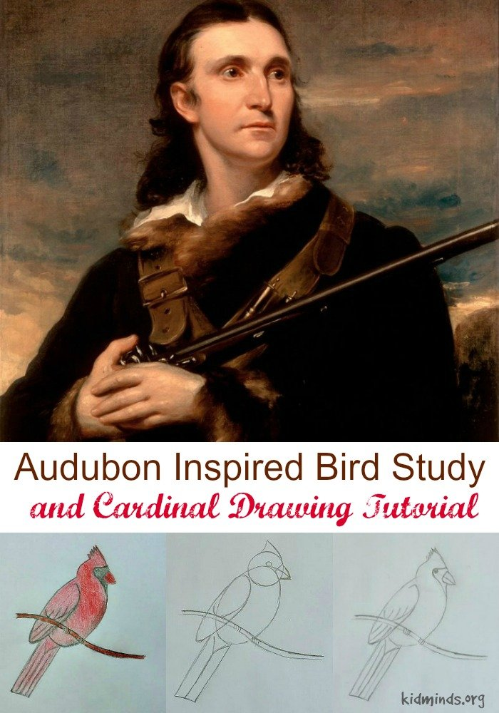 Audubon Inspired Bird Study and Cardinal Drawing Tutorial