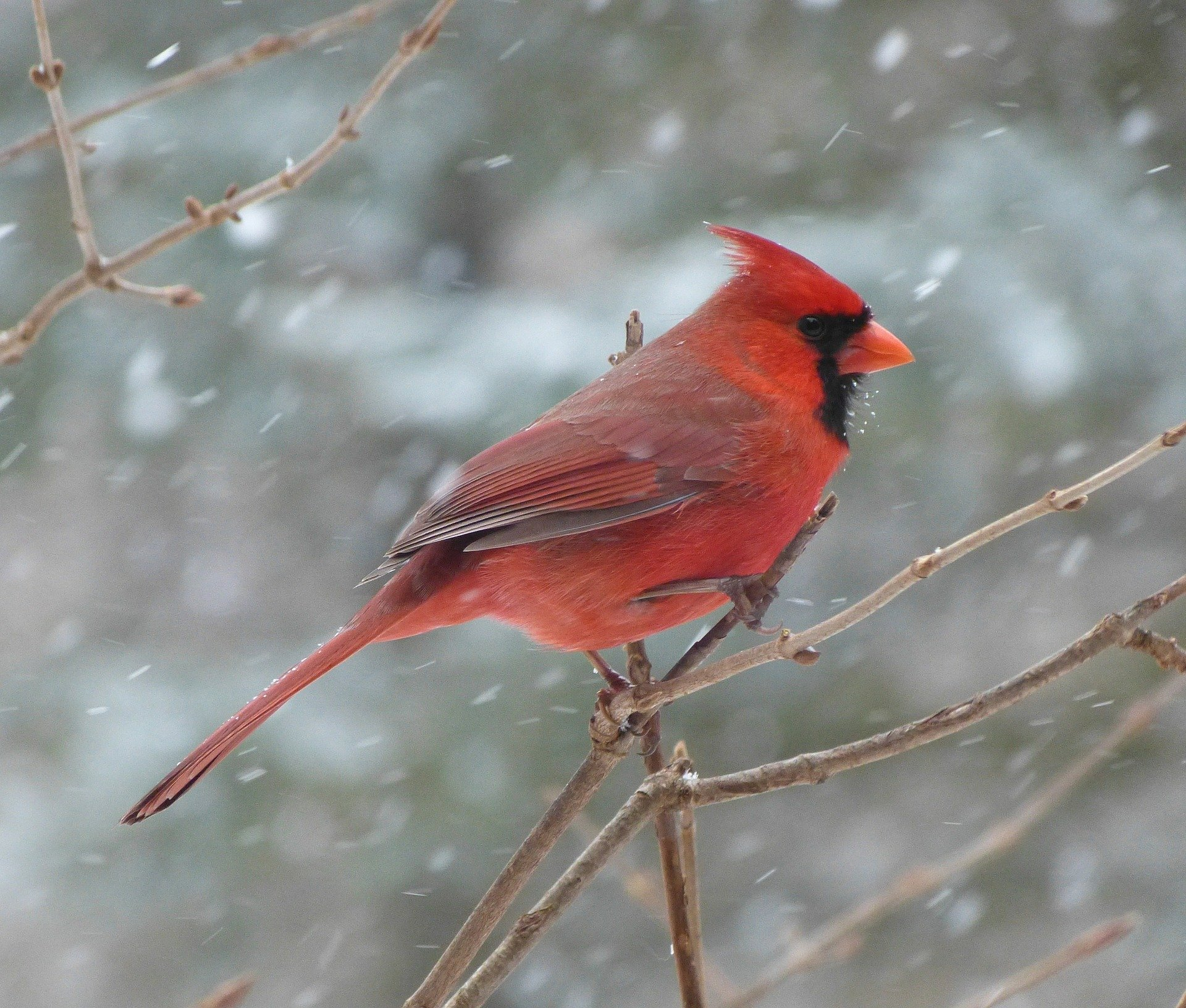 Audubon inspired Bird Drawing Tutorial