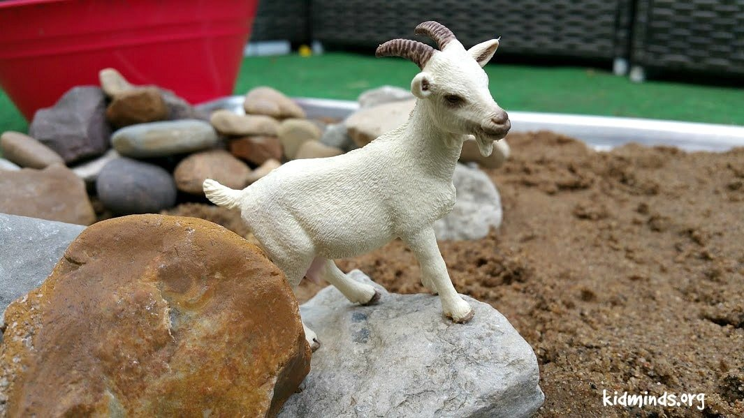 Goat Activity Sensory PLAY 4