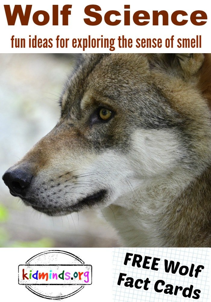 Wolf Science: exploring the sense of smell