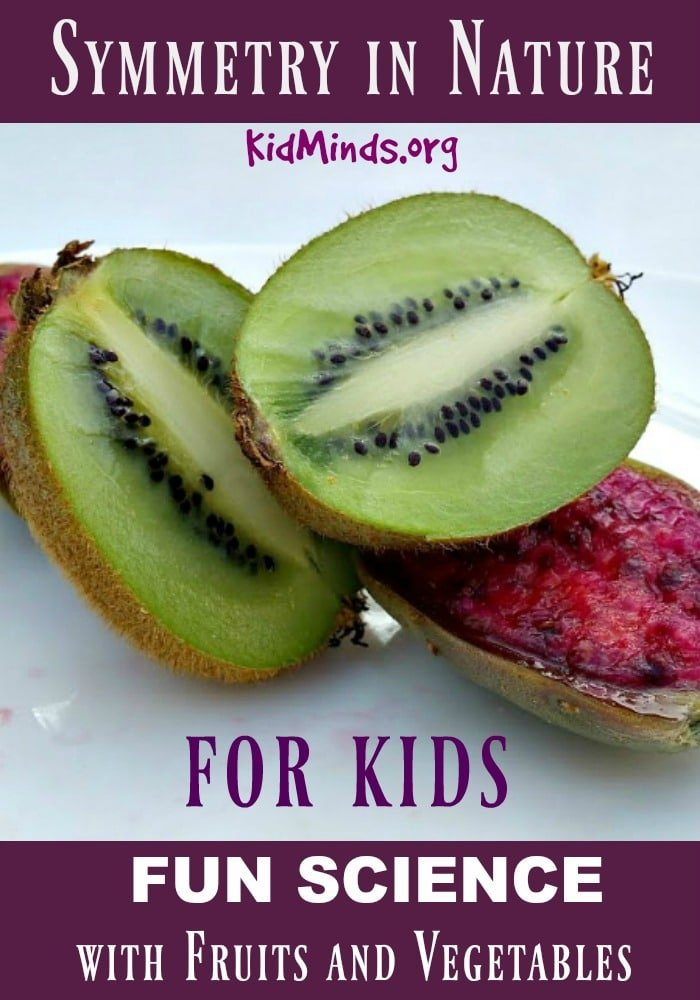 Your kids might possibly find fruits and vegetables more appealing after you explore them together. Hands on exploration with #symmetry in #nature #kidsfun #kidsactivities #education