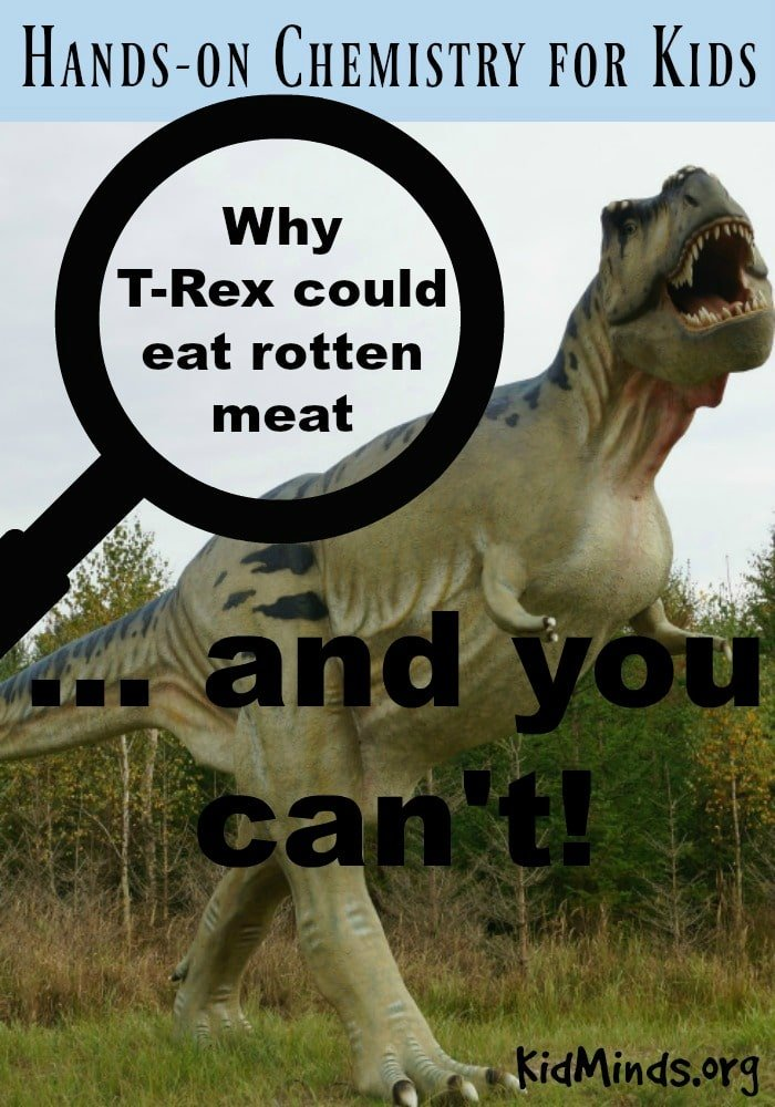 Why T-Rex could eat rotten meat and you can't.  Dive into this Hands-on Experiment to discover the value of acids and what they can do for you #chemistry #dinosaurs #handsonscience