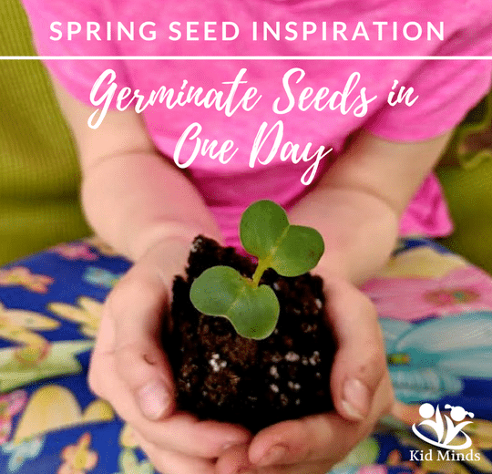 Seed Magic: How to germinate seeds in one day (with printable)