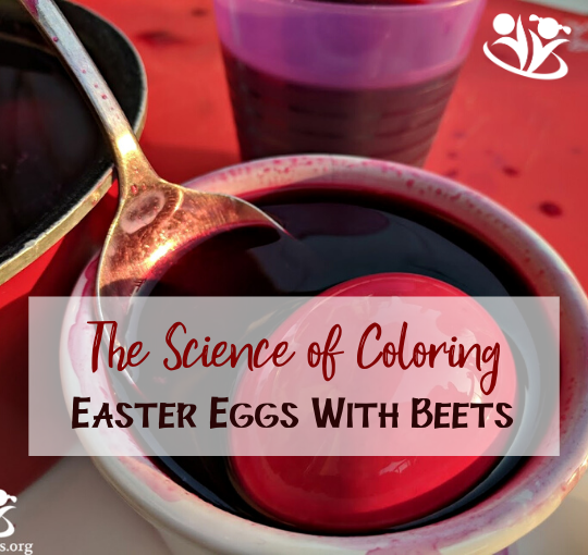 The science of coloring Easter Eggs with beets. If you always reach for artificial colorants to color eggs with your kids, consider some more natural alternatives this year. #handsonlearning #greenliving #creativelearning #Easter #eastereggs #thescienceofcolor #scienceforlittlekids