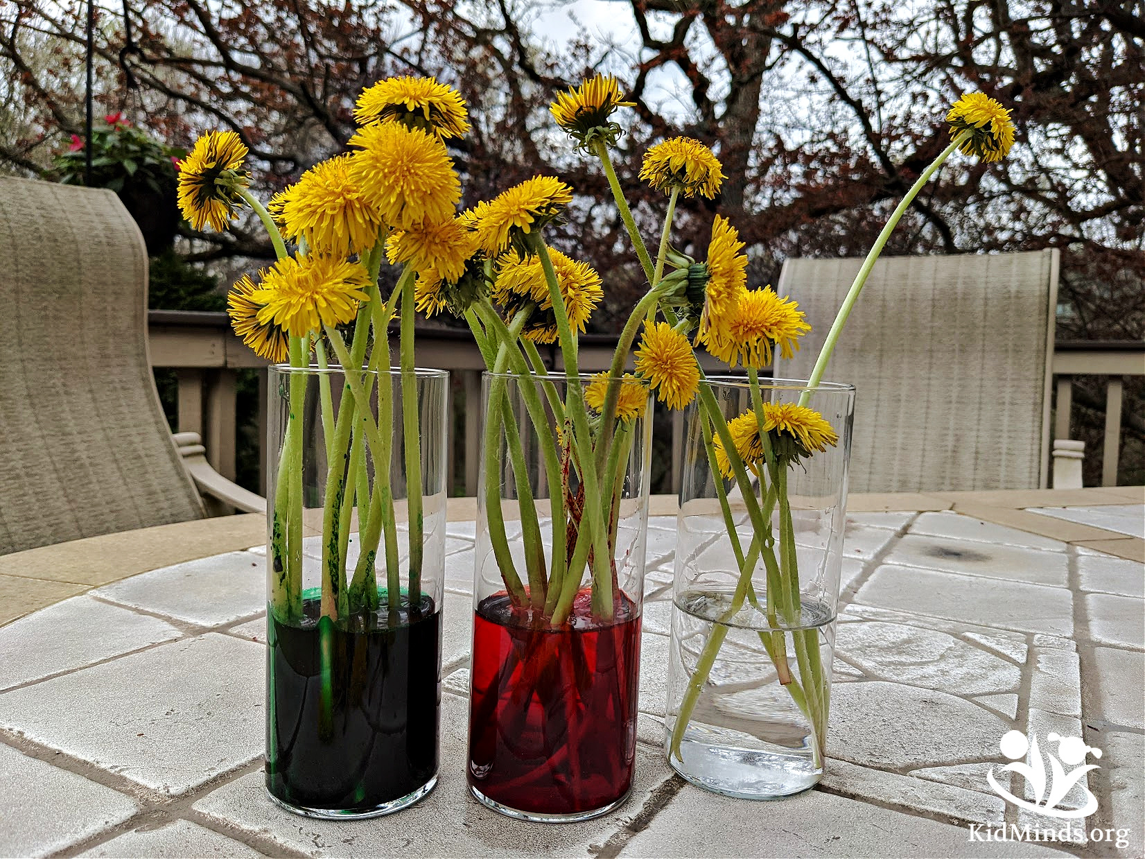 Dandelions have a reputation of being merely pesky weeds, but they are actually quite fascinating, and we can't wait to share those remarkable dandelion experiments and activities with you. #handsonlearning #kidsactivities #spring #dandelions