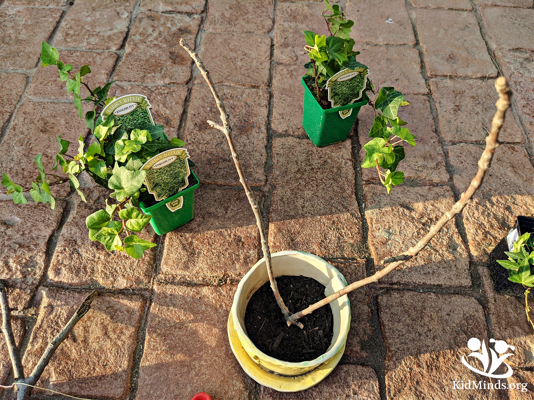 Father's Day Topiary combines the science of growing with hands-on exploration and the all-important practice of patience. #handsonlearning #kidsactivities #STEM