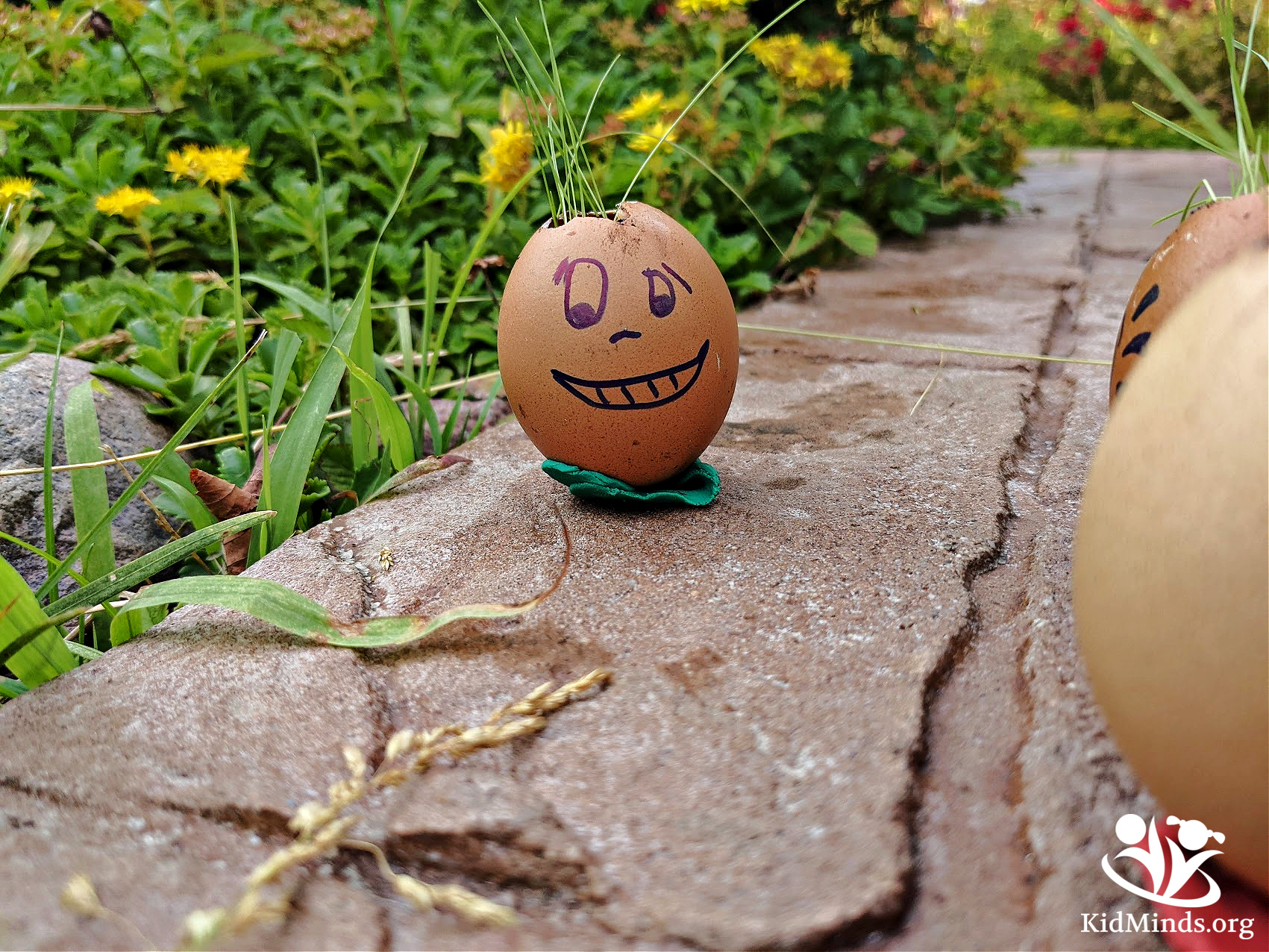 Growing seeds in eggshells is a fun STEM activity. It's a perfect project for spring, summer, Earth Day, or any time you feel like growing something green. #kidsactivities #eggscience #seedscience #homeschooling